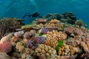 great barrier reef australia